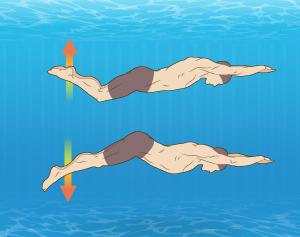 Body Dolphin
